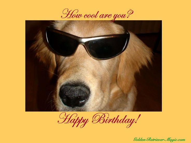 Happy Birthday With Dogs Images Free Dog Ecards Free