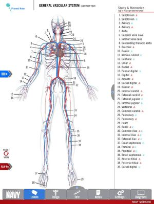 1000 images about Anatomy Study Guide on Pinterest