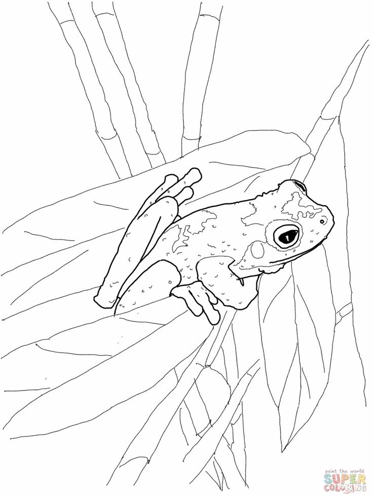 Green Frog Colouring Pages Page
