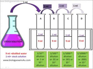 Serial dilution Procedure diagram | Biotechnology Notes