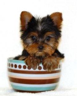 look at me im in a teacup..