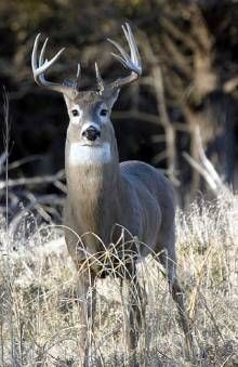 Hunting Tips For Year Round Deer Scouting