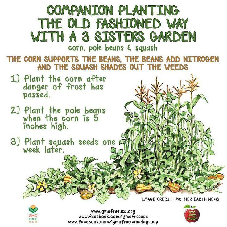 A threesisters garden garden beds and paths Pinterest