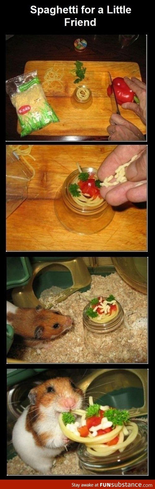 Sphagetti for a Little Friend. Laugh out loud. Adorable, furry animal. Squee. Ha