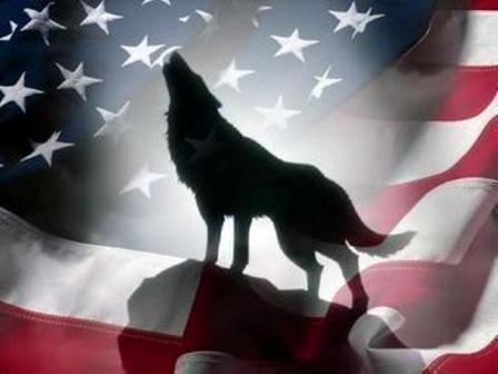 Beautiful Wolf And American Flag Howling Wolf