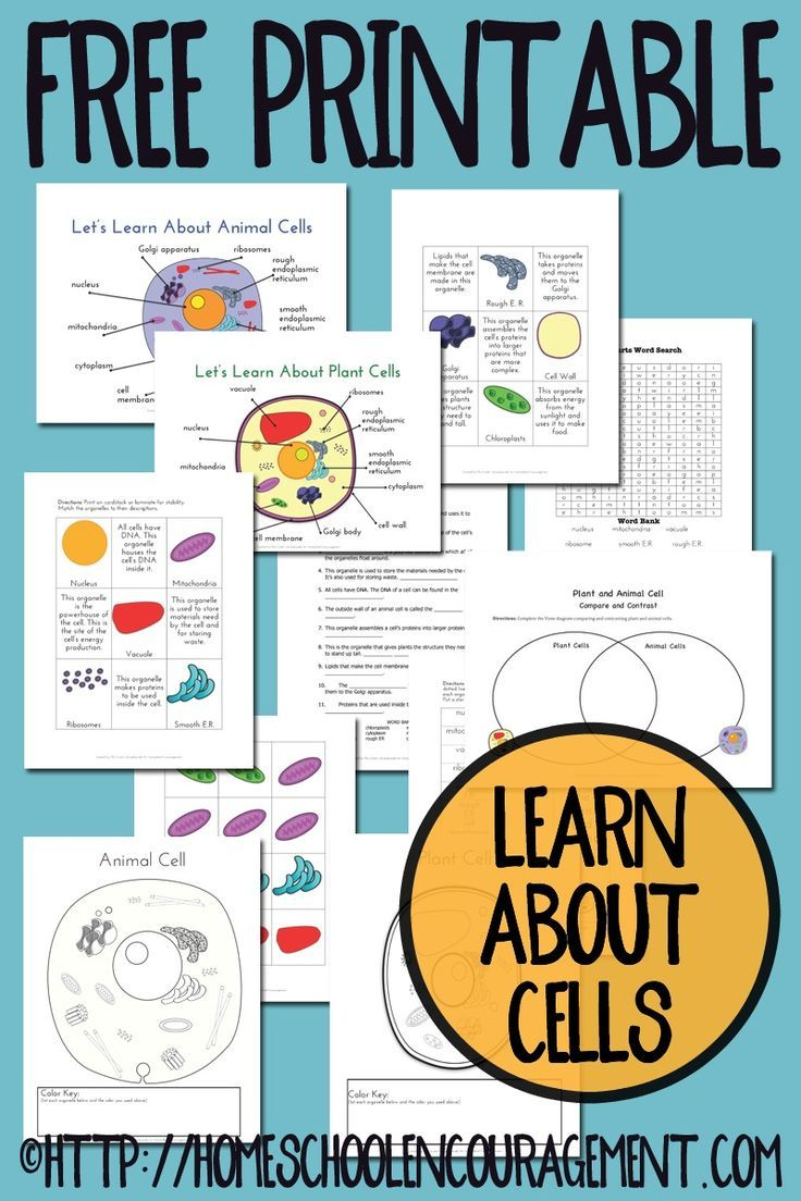 Plant and Animal Cell Printables Grades 46 Plants, Free