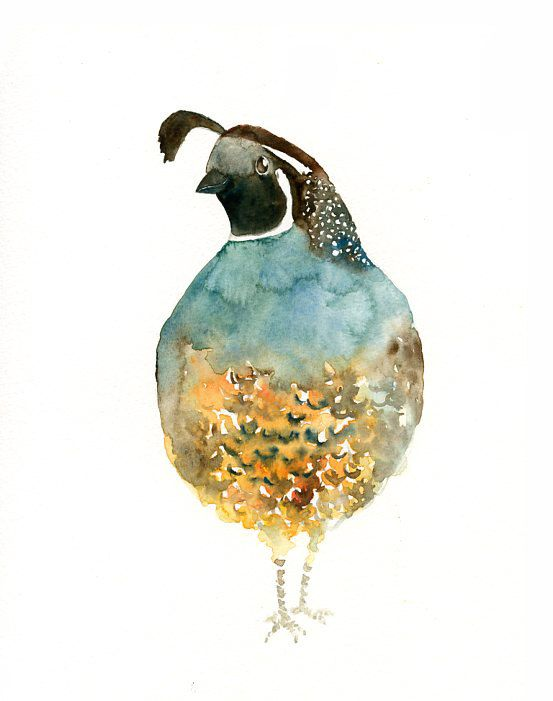 1000 Images About Quail On Pinterest