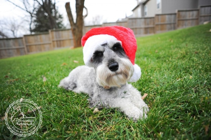36 Best Images About Dogs Chritmas On Pinterest Boo