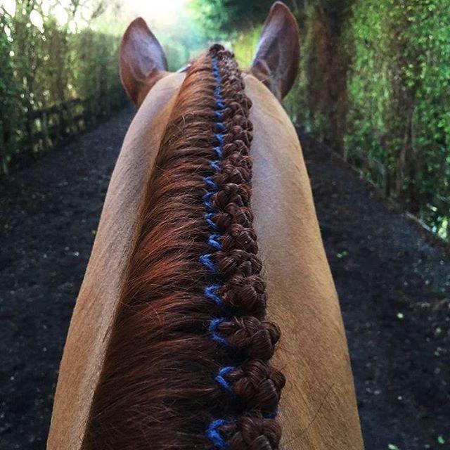 Beautiful Horse Hairstyles Cowboy Magic Cowboy Magic