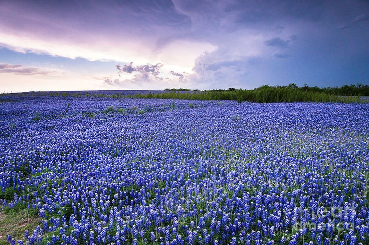 Storm Is Coming In Wildflower Field