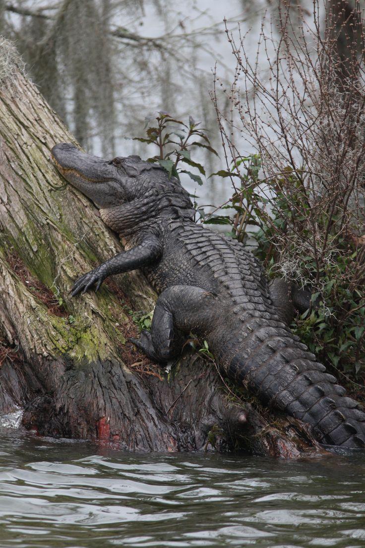Lake Martin Louisiana Swamp Want to make extra money? Run