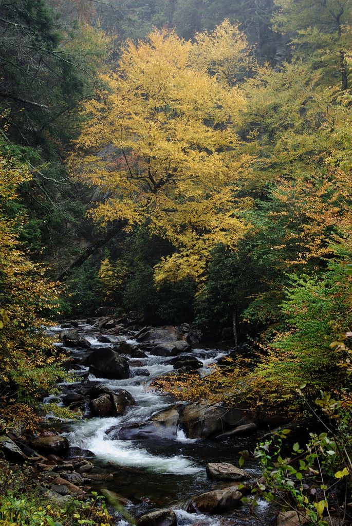 Fall in the Great Smoky Mountain National Park, Tennessee