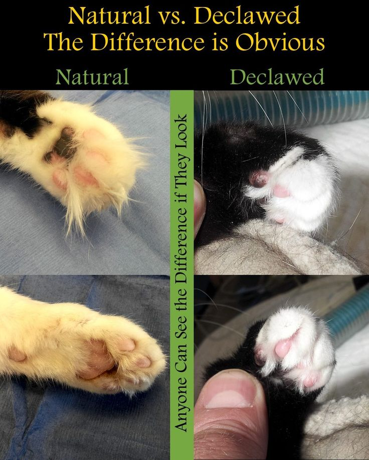 how much do it cost to get a cat declawed