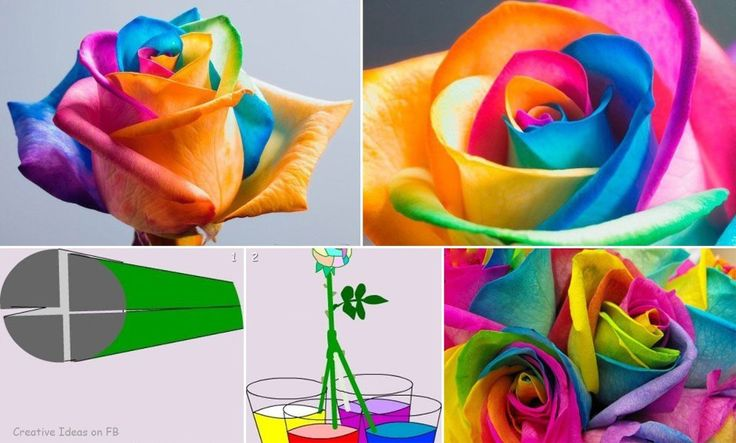 Cool science experiment for kids! R
