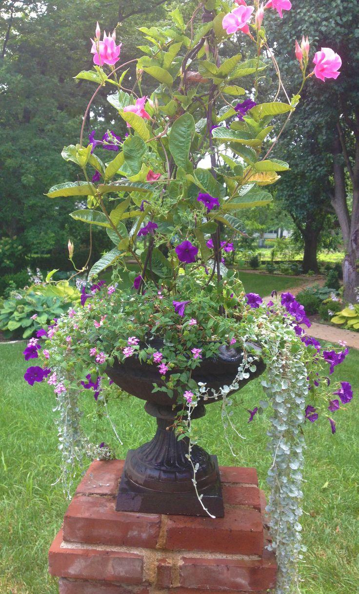 Cascading Wave Petunias and Lantana surround a Mandevilla