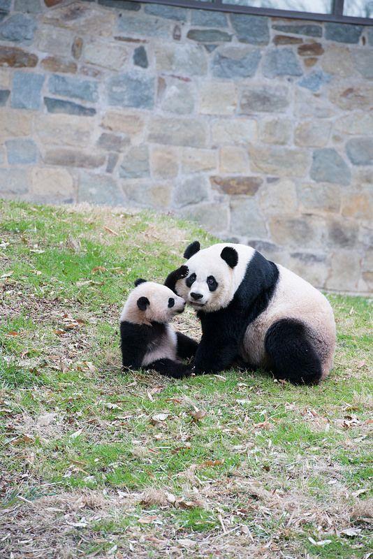 Combined Koala Panda And