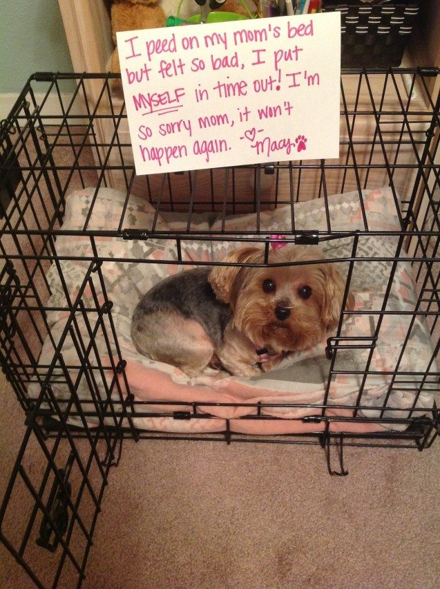 Image Result For What To Do If Your Dogs On The Carpet