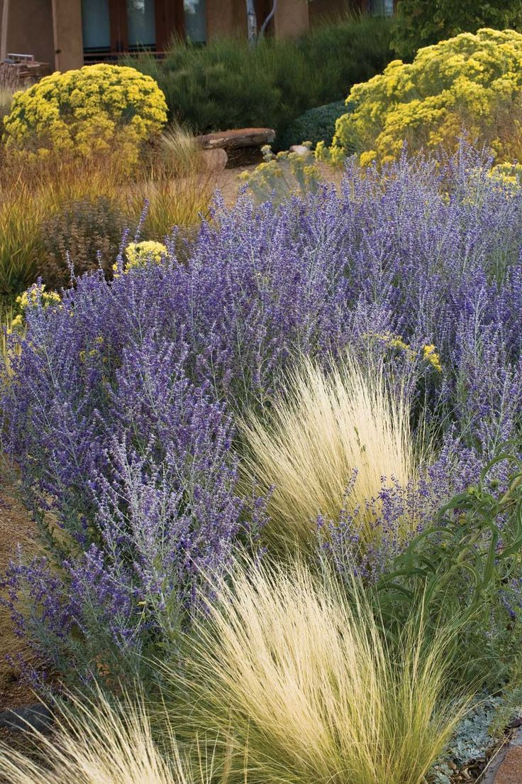 563 Best Images About Ornamental Grasses And Landscape