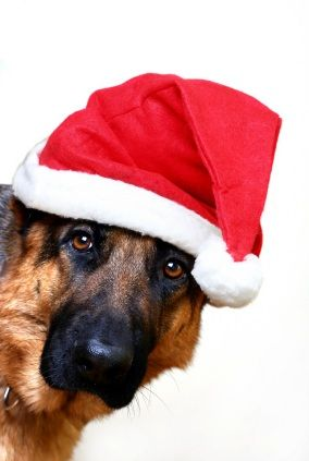 German Shepherd Merry Happy Christmas Day Card Puppy
