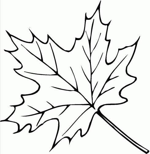 coloring pages folha de outono crafting feathers leaves coloring