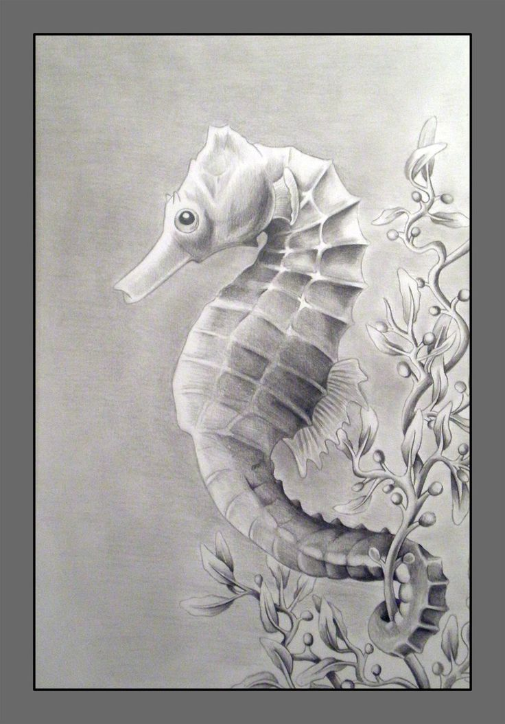 sketch of sea horses Another drawing for that Nature