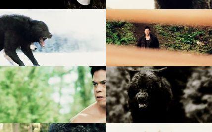 Twilight wolf pack: imprints Seth: he turns Wattpad | Hot