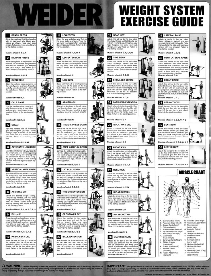 Weider Pro 6900 Exercise Chart Charts Search And Heroes