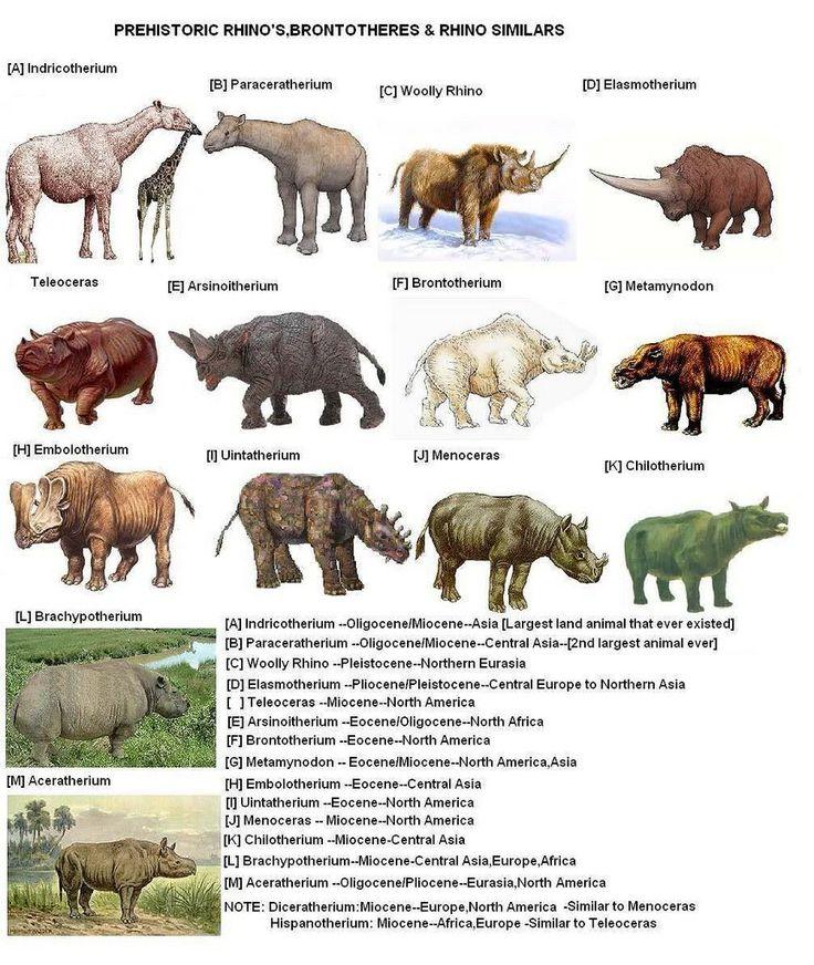 Prehistoric Prehistoric Rhinos Paleontology