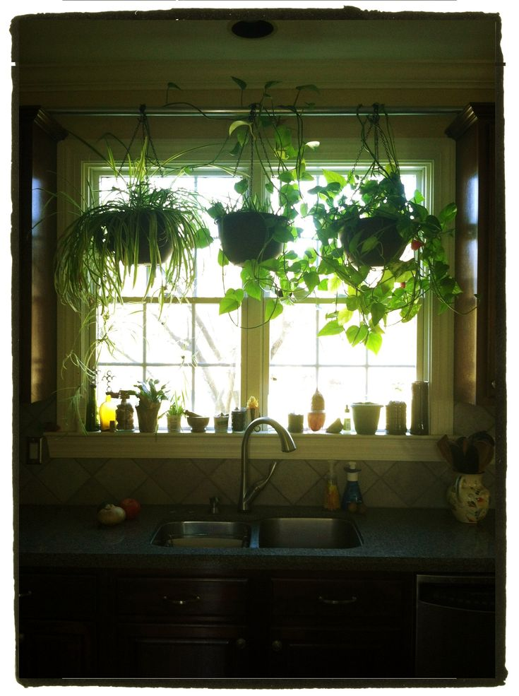 Hang Plants In Your Kitchen Window Without Putting Any