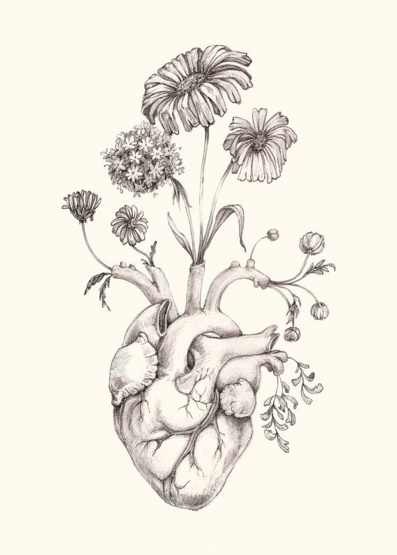 "IMPROVED 5×7″ PRINT of original drawing ""Blooming Heart"" on NEW ivory paper- graphite, art, anatomy, floral, heart, valentine"