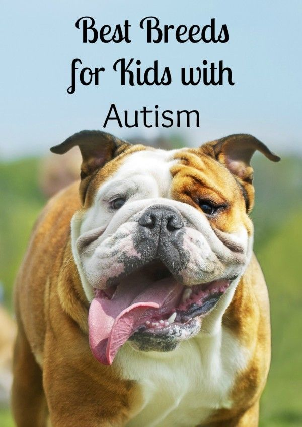 Thinking about getting a dog for a special needs child? See our picks for the best dogs for kids with autism! A special buddy can make a big difference!: