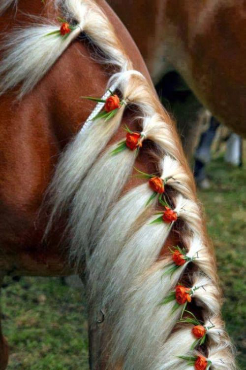 25 Best Ideas About Horse Flowers On Pinterest Horse