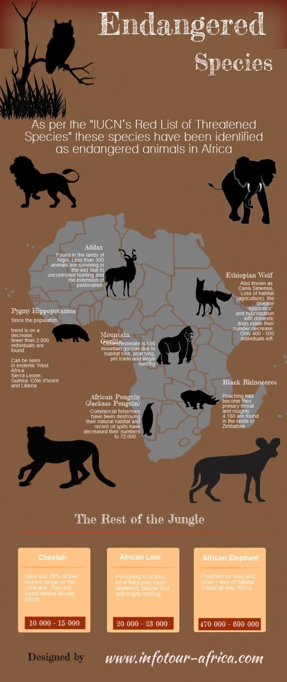 Endangered Species Endangered Species Infographics