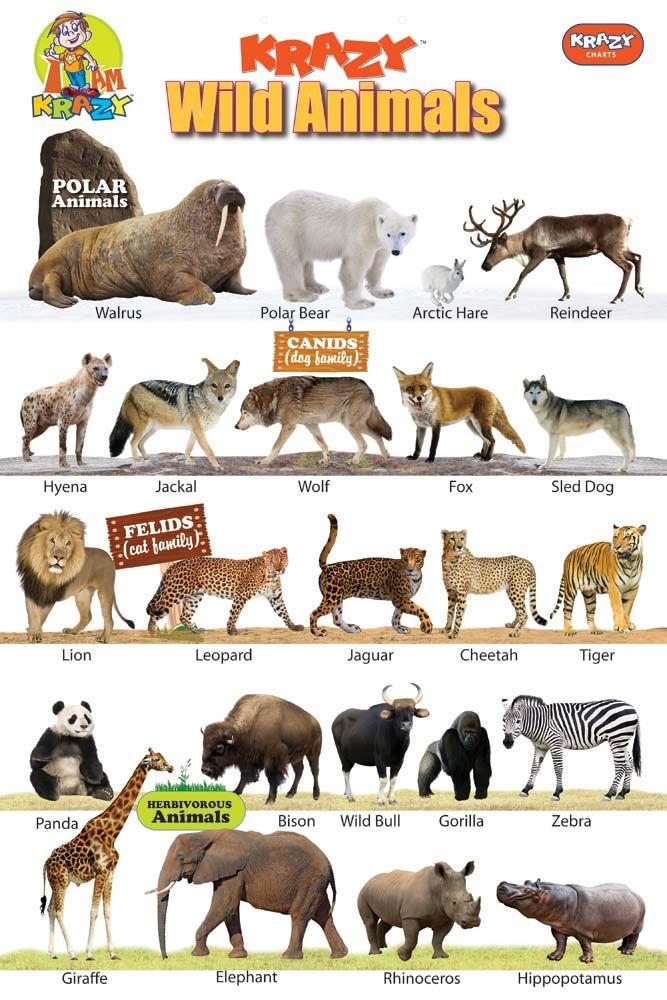 krazywildanimalschart1015321.jpg (667×1000) Animal