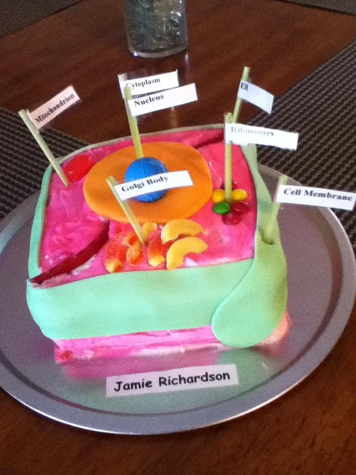 Animal Cell Cake for Jamie's 7th grade science project