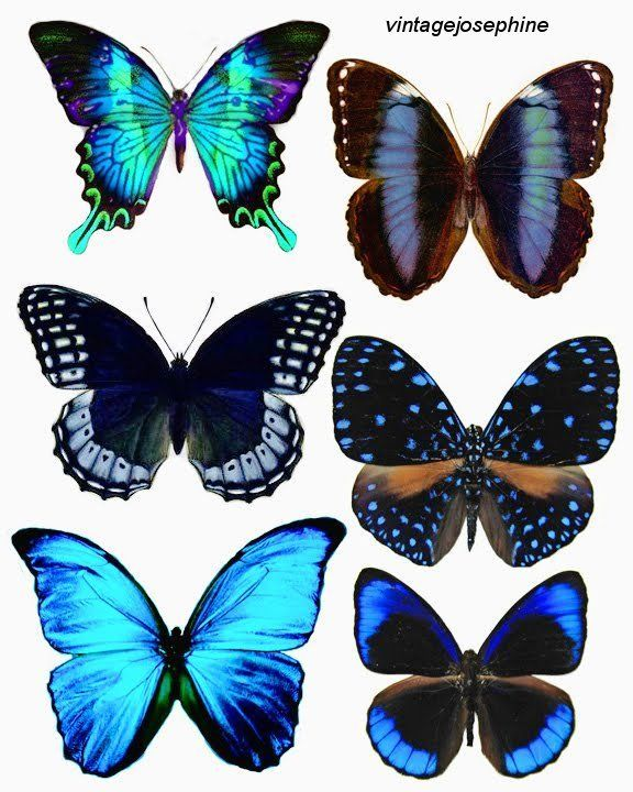 Butterfly tattoo ideas, I love the two in the middle. My sister and I were supposed to get matching butterfly tattoos years ago.