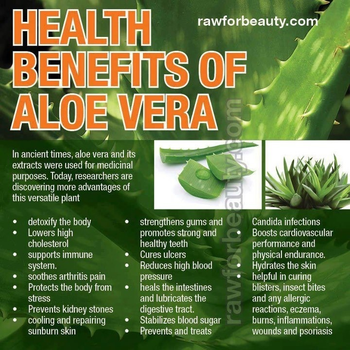 Health benefits of Aloe Vera Aloe Vera Pinterest