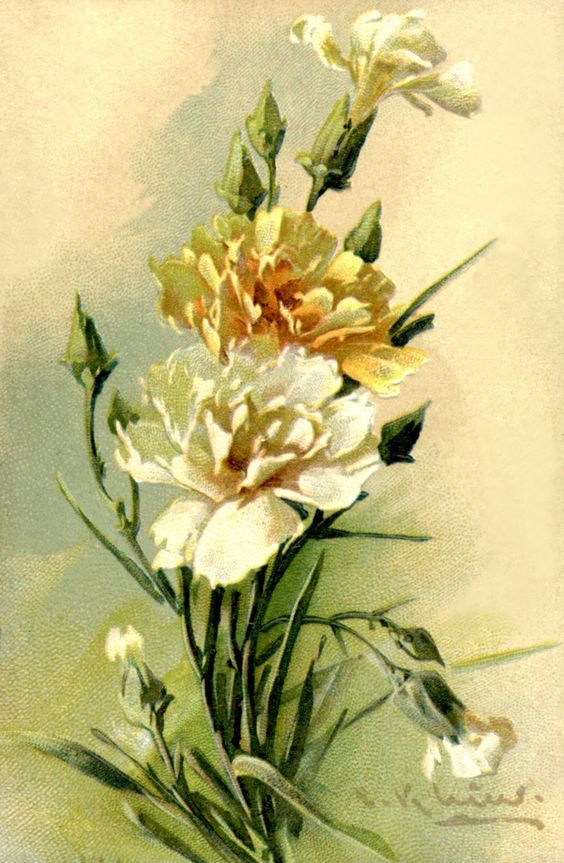 17 Best Ideas About Catherine Klein On Pinterest Vintage Roses Vintage Flowers And Watercolor