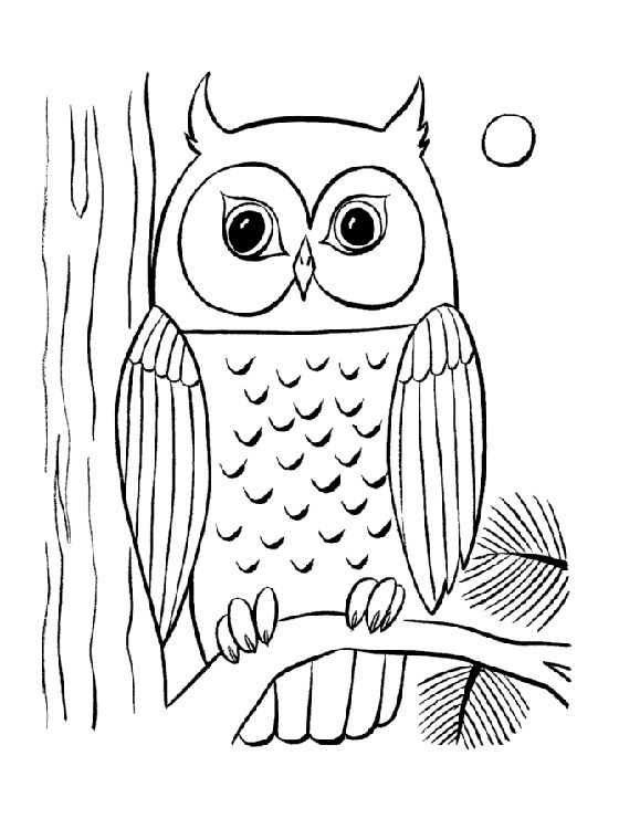 1000 ideas about owl coloring pages on pinterest coloring pages