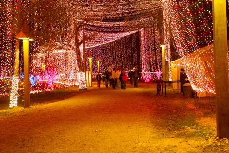 Camps, 'salem's lot and Lights on Pinterest
