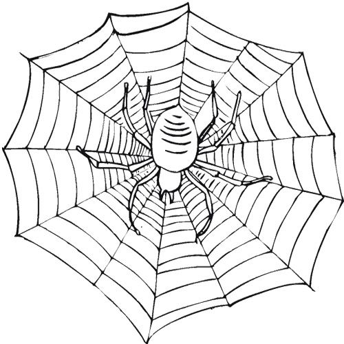 spider on a web coloring page coloring pages misc scary spiders