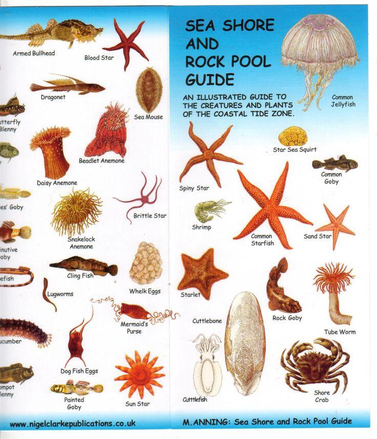 oregon tide pool identification Google Search Tide