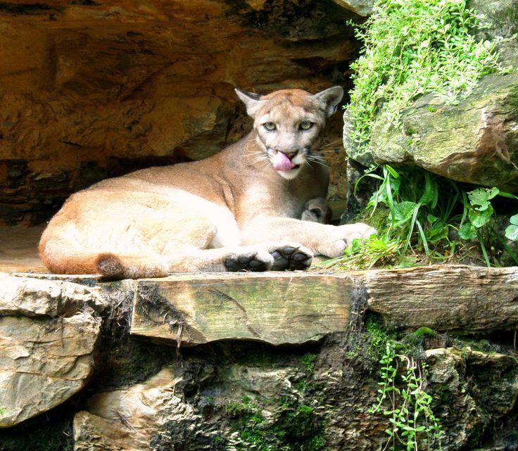 Adjacent to Hersheypark, ZooAmerica North American