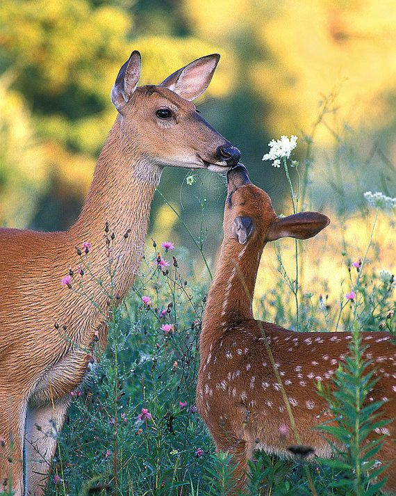 Mama and fawn, such a sweet moment