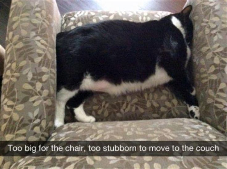Funny Animal Pictures Of The Day 27 Pics Funny Animals
