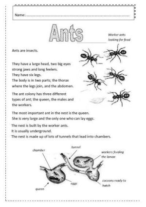 insects worksheets free | Ants worksheet  Free ESL printable worksheets made by teachers