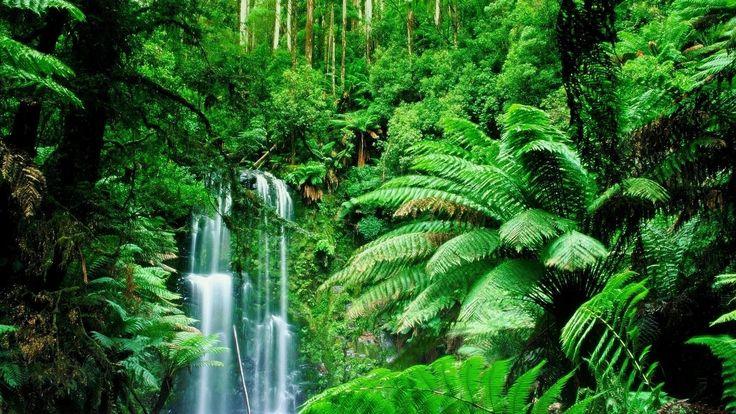 Amazon Rainforest, Feel the Rainfall of Leaves Trees