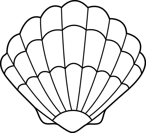 1000 ideas about seashell drawings on pinterest shell drawing
