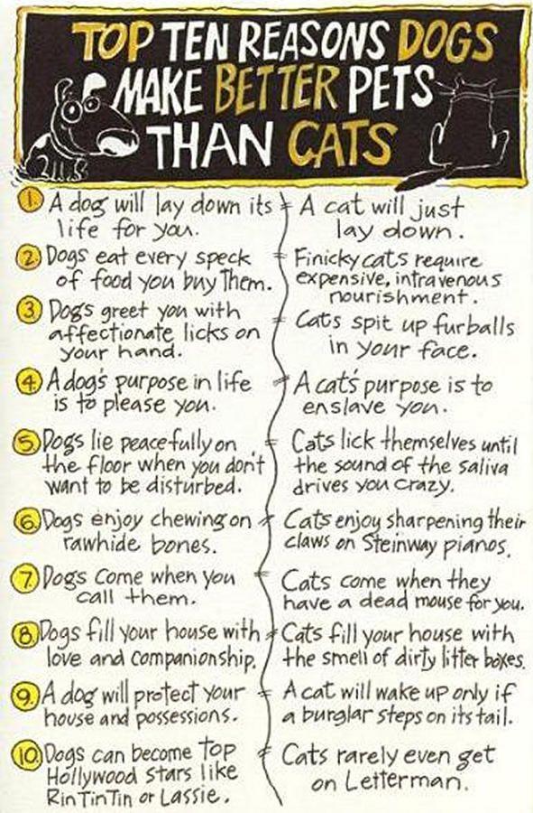 dogsbetterthancats6.jpg (591×900) floors Pinterest