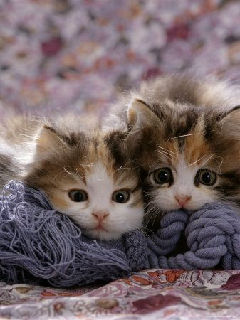 sweet faces